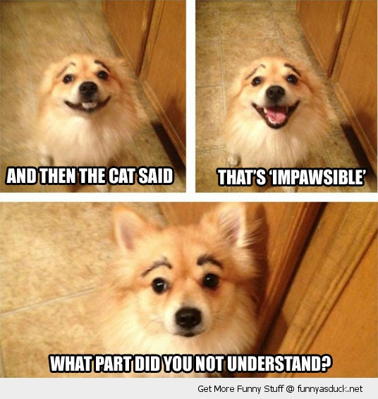 Dog Quotes Funny Jokes. QuotesGram