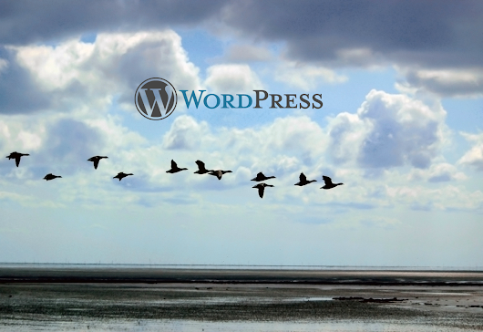 What to Consider Before Moving your WordPress Site to a New Provider - Orbisius
