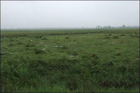Floods in Ampaarai district