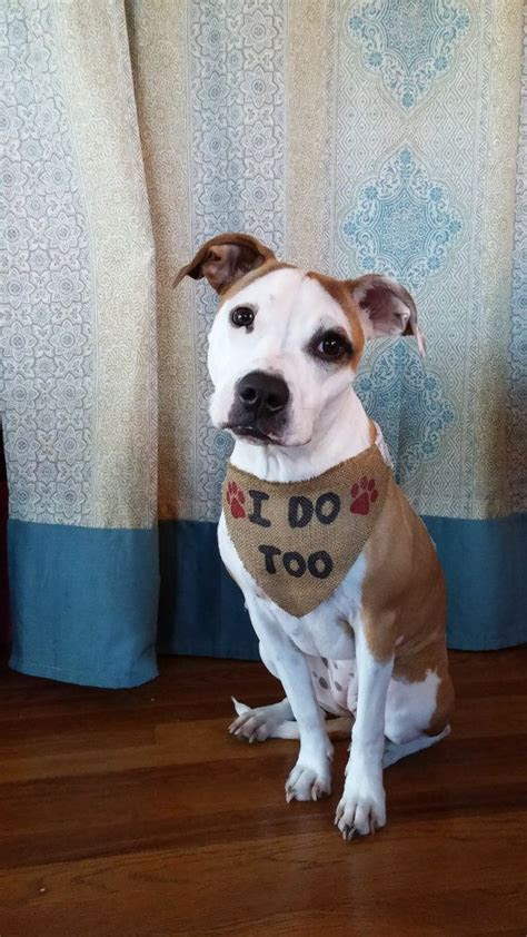 Best 25  Dog wedding ideas on Pinterest