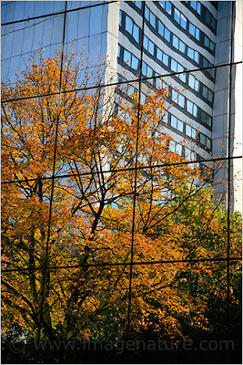 Fall tree reflection in a glass building