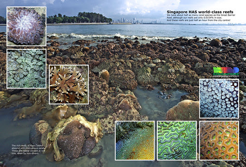A4 Poster: Singapore has world-class reefs