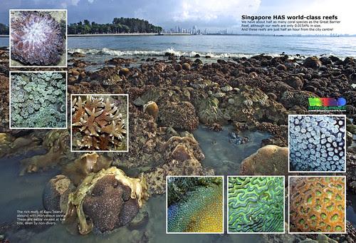 A4 Poster: Singapore has world-class reefs