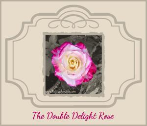 Rose #13