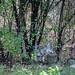 CoyoteOct2012-0635