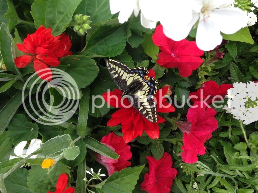 photo 603B88D0-D6BF-4DF7-ADCB-FD40E3B31D67.jpg