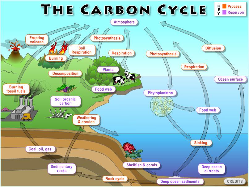 global_carbon_cycle_1427132279_1200