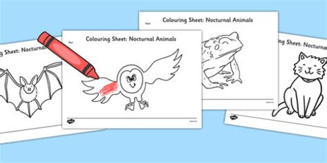 nocturnal animals colouring pages nocturnal animals