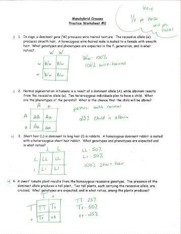 35 Monohybrid Cross Practice Worksheet - Worksheet ...