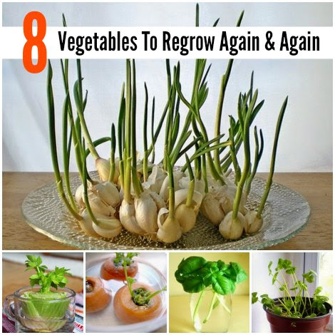 vegetables-to-regrow