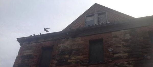 pigeon-problems-greysealhugger-posted-this-photo-of-the-building