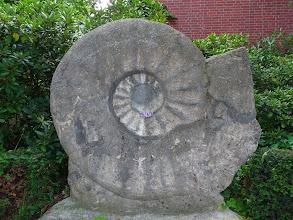 """Photo: Seppenrade - ein Abguss des größten bekannten Ammoniten """"Parapuzosia seppenradensis"""", den man 1895 hier gefunden hat. Zum Größenvergleich: im Ammoniten liegt eine Handytasche."""