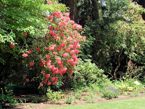 Photo: Rhodie at Lakewold Gardens