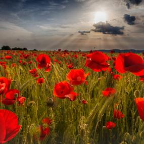 West in tonight ! by Adrian Urbanek - Flowers Flowers in the Wild