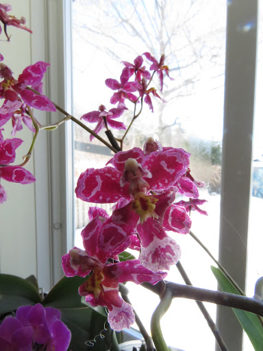 Les orchidées de Grigri PsJWMKjjlV7iw_nxATj4zioTloZAqzFWNMml9v4gooRczRq8iKVZWtCCWQS_8ktnkHgpXlPcevLnOEPkn3TCFeVcD3hAxrSfs_rEE8gIWj6o8UGqBmG6mmHN9KgRyBN4L2kcf5g