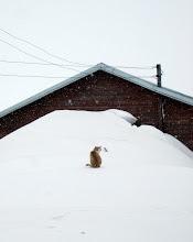 Photo: The cat contemplates