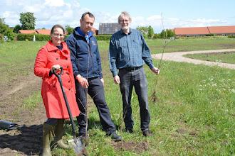 Photo: Camillar Fabricius, flankeret af Lars Heiselberg og Jørgen Bak, planter tre kvindeege som markering af 100-året for grundloven, der gav kvinder valgret
