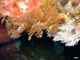 Photo: caberea dichotoma / 2012 Sulawesi