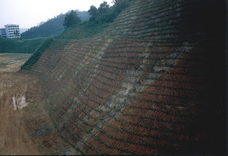 Photo: CHN-UR06 College campus site in China - New vetiver treatment