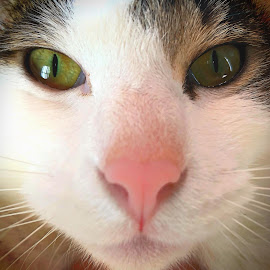 Yume Close Up by Bill      (THECREOS) Davis - Animals - Cats Portraits ( #cat, #nose, #eyes, #furry, #reflection, #whiskers, #face, #closeup,  )