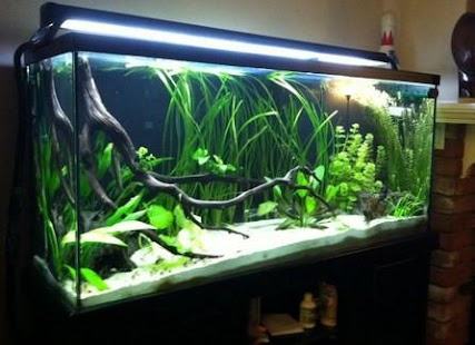 Diy aquascape layout android apps on google play for Aquarium 120l