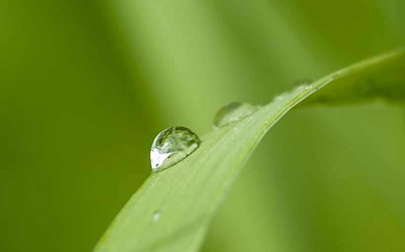 Dopo la pioggia di sapo56