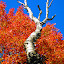 Changing seasons by Michelle Kelly - Novices Only Flowers & Plants (  )