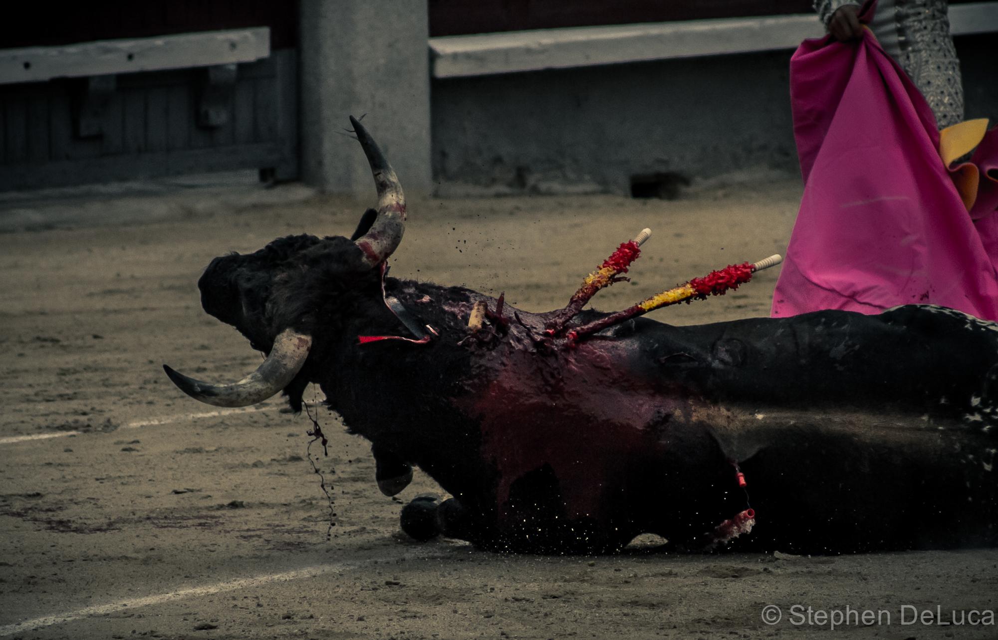 Photo: Bullfight-6