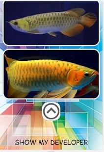 Tải Cuộc thi cá rồng APK