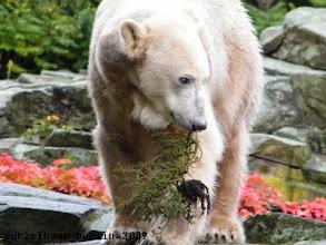 Photo: Knut hat ein Pflanzenbueschel gefunden :-)