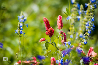 Photo: hummer flowers