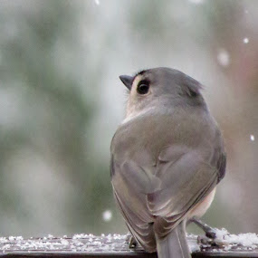 Winter has arrived by Mona Marie Hess - Animals Birds ( monahess )