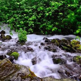 Stream by Bharath Booshan - Nature Up Close Water