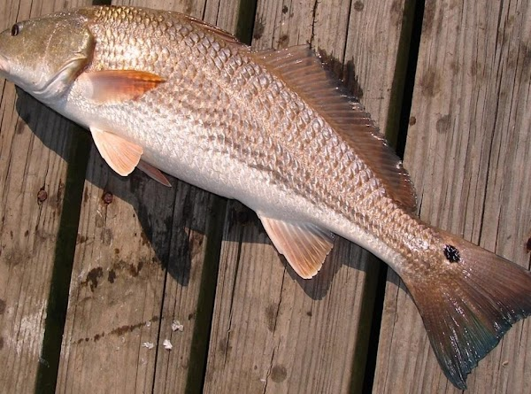 You need one 5-6 pound redfish for every two servings. Rinse some of the...