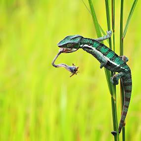 i got you by Shikhei Goh II - Animals Reptiles