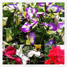 Photo: Spring balcony flowers #intercer #flower #flowers #color #plants #beautiful #fresh #garden #spring #red #yellow #white #pansee #life #cute #smell #🌸 #🌷 #🌺 - via Instagram, http://ift.tt/1Hk973r