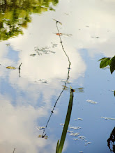 Photo: Dragonfly and reflection resting on a stick out of the lake at Cox Arboretum in Dayton, Ohio.