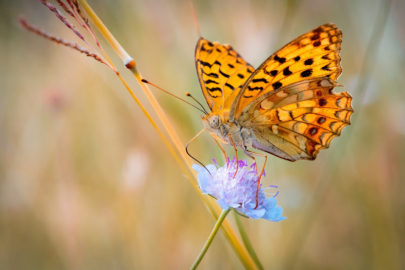 Lo spuntino della farfalla di Matteo Masini