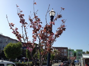 Photo: Home sweet home, for the last Spring blossoms