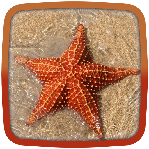 Starfish Live Wallpaper
