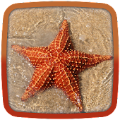 Starfish Live Wallpaper