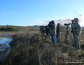 Photo: Watching for rails from the now-removed Waldo's Dike on Tomales Bay, Marin County.