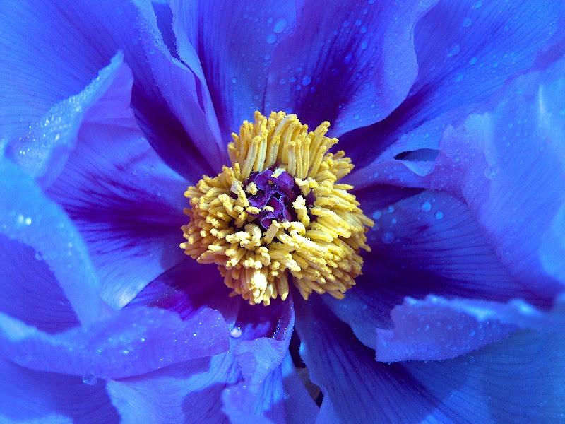Dolce blu di Gioia Callegaro
