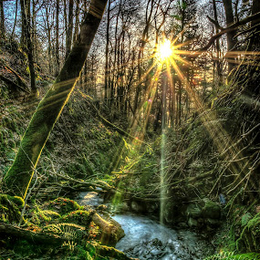 Skelghyll Wood by Alex Barrow - Nature Up Close Trees & Bushes ( skelghyll wood, fern, hdr, trees, sun, lake district, river, HDR, Landscapes, , renewal, green, forests, nature, natural, scenic, relaxing, meditation, the mood factory, mood, emotions, jade, revive, inspirational, earthly, relax, tranquil, tranquility )