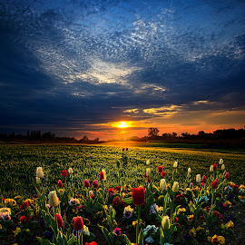 Lifetimes by Phil Koch - Landscapes Prairies, Meadows & Fields ( vertical, summer. spring, photograph, farmland, yellow, leaves, love, nature, autumn, snow, flowers, orange, twilight, agriculture, horizon, portrait, environment, winter, season, national geographic, serene, floral, inspirational, natural light, wisconsin, phil koch, spring, photography, sun, farm, ice, horizons, inspired, office, clouds, hdr, green, scenic, morning, field, spring colorful flowers, red, blue, sunset, fall, peace, meadow, earth, sunrise, landscapes )