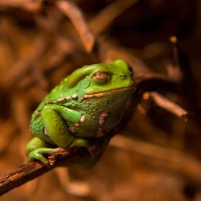 by Alex Shamis - Animals Amphibians