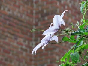 Photo: Flowers & Wall, Stratford