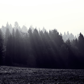 morning forest by Miro Polča - Landscapes Forests ( morning morning )