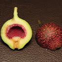 Rafflesia Fig