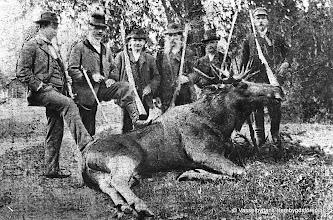 Photo: Älgjakt vid Västra Gården omkrin år 1900